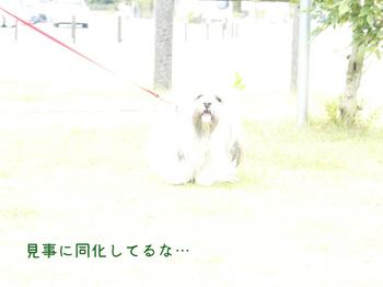 08-04.jpg