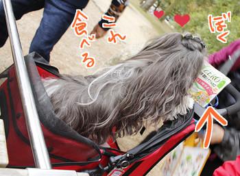 2015kyoto-21.jpg
