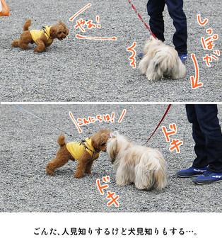 2015kyoto-24.jpg