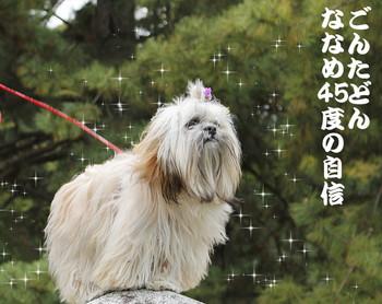 2015kyoto-25.jpg