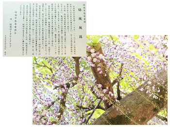 takedasuga-03.jpg