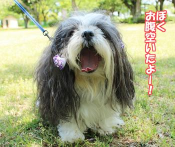 takedasuga-04.jpg